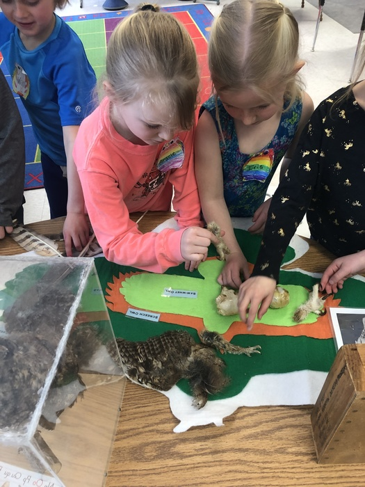 First graders learning about owls during the Chewonki Traveling Natural History program